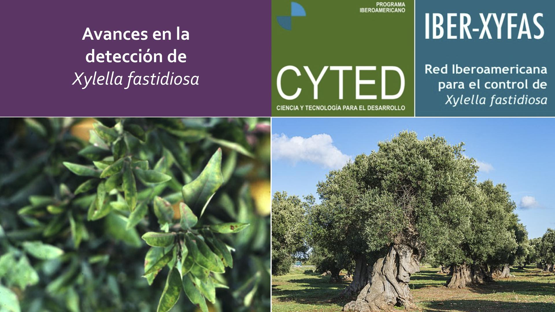 International Day: Advances in the detection of 'Xylella fastidiosa'